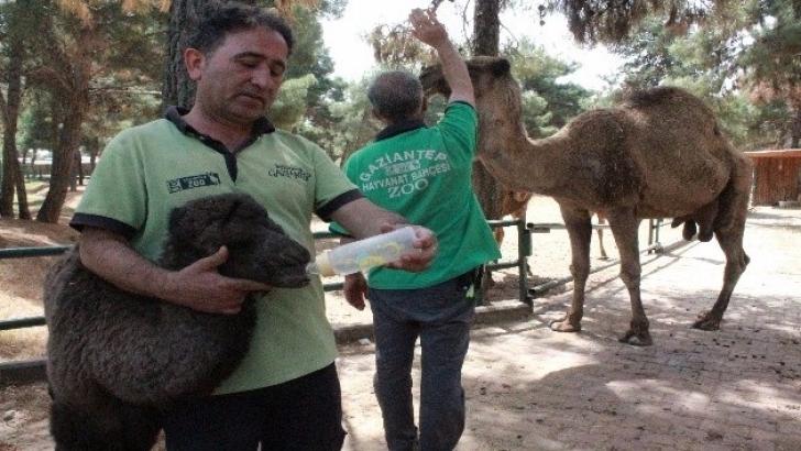 Hayvanat bahçesi ailesine katıldılar