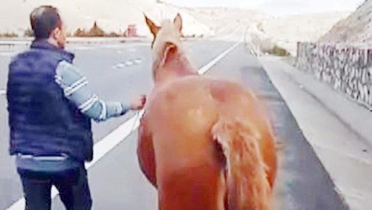 Başıboş at otobanda hipodromdaymış gibi koştu