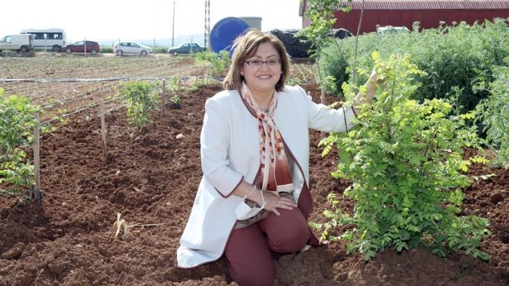 Büyükşehir tarıma önem veriyor