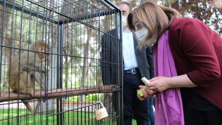 Sınırda yakalanan 12 maymun Gaziantep'te koruma altına alındı
